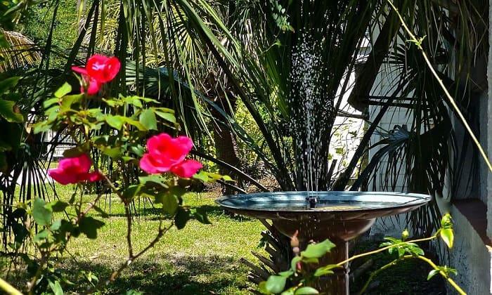 solar-powered-birdbath-fountains